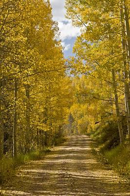 Dolores Photograph - Aspen (populus Sp.), Usa by Science Photo Library