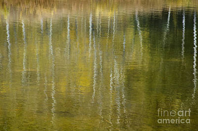 Photograph - Aspen Reflection by Dee Cresswell