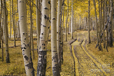 Old Country Roads Photograph - Aspen Road, Co by Sean Bagshaw