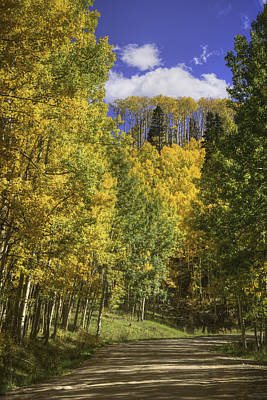 Photograph - Aspen Road by David Waldrop