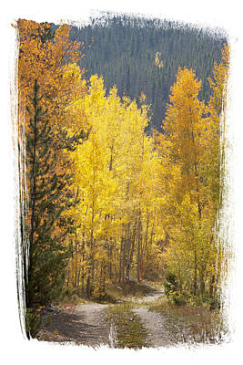 Photograph - Aspen Road by Judy Deist