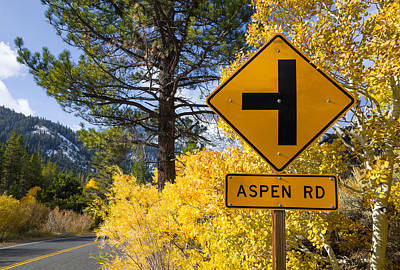 Photograph - Aspen Road  by Priya Ghose