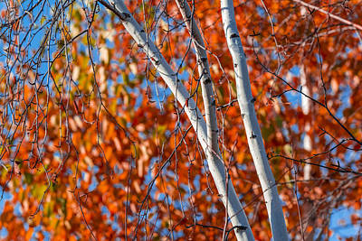 Art Print featuring the photograph Aspen by Sebastian Musial