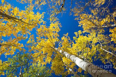 Fall Foliage Photograph - Aspen Sky by Inge Johnsson