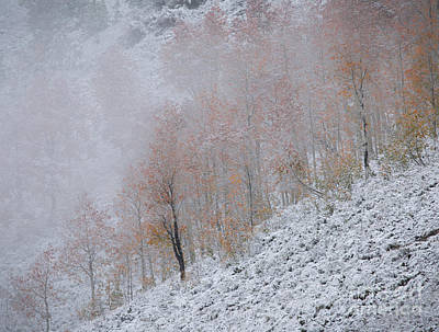 Photograph - Aspen Snow by Idaho Scenic Images Linda Lantzy