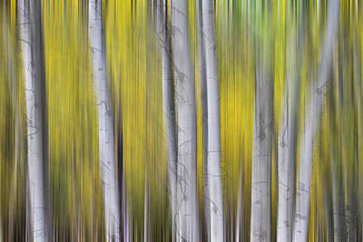 Photograph - Aspen Splendor Dreaming by James BO Insogna