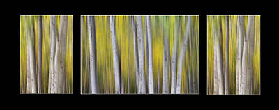 Photograph - Aspen Splendor Dreaming Triptych Collage by James BO Insogna