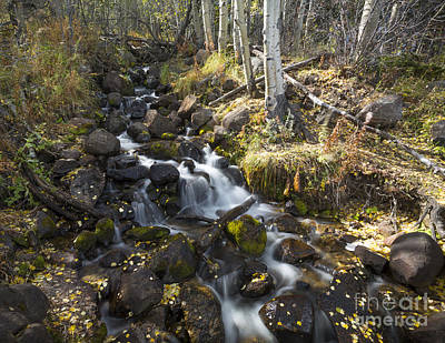 Photograph - Aspen Stream by Idaho Scenic Images Linda Lantzy