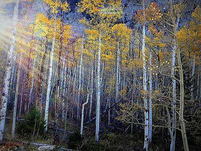 Photograph - Aspen Sunset by Karen Shackles