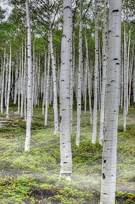 Photograph - Aspen Towers by Ken Smith