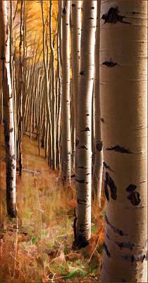 Jeff Johnson Photograph - Aspen Trail by Jeff Johnson