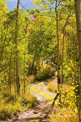 Steven Krull Royalty-Free and Rights-Managed Images - Aspen Trail by Steven Krull