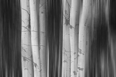 Have A Cupcake - Aspen Tree Colonies Dreaming BW by James BO Insogna