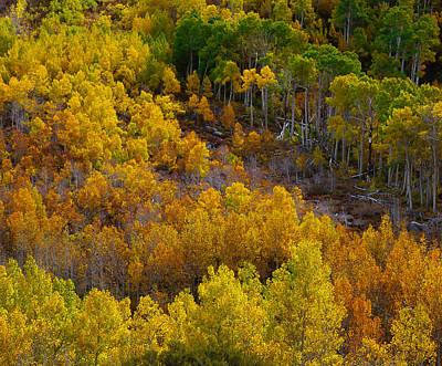 Photograph - Aspen Tree Hill by Paul Breitkreuz