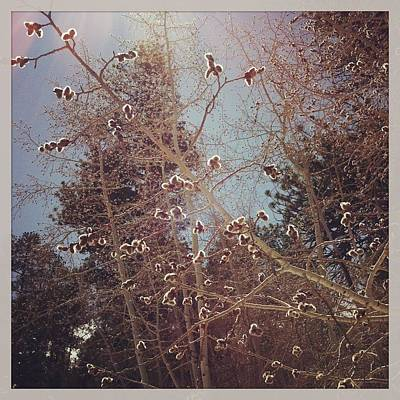 Instagram Photograph - Aspen Trees Budding In Spring by Posters of Colorado