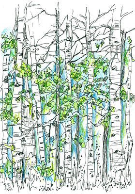 Drawing - Aspen Trees by Cathie Richardson