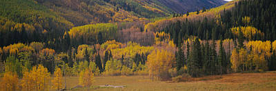 Aspen Trees In A Field, Maroon Bells Art Print by Panoramic Images