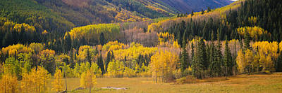 Woods.hills Photograph - Aspen Trees In A Field, Telluride, San by Panoramic Images
