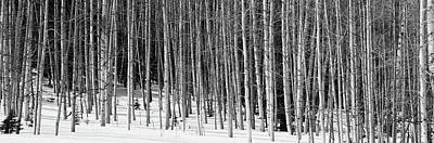 Repetition Photograph - Aspen Trees In A Forest, Chama, New by Panoramic Images