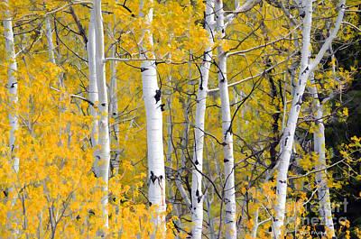 Photograph - Aspen Trees In Fall by Dan Friend