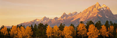 Teton Photograph - Aspen Trees On A Mountainside, Grand by Panoramic Images