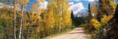 El Paso Photograph - Aspen Trees On Both Sides Of A Road by Panoramic Images