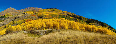 Aspen Trees On Mountain, Alpine Loop Art Print by Panoramic Images