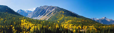 Aspen Trees On Mountain, Little Giant Art Print by Panoramic Images