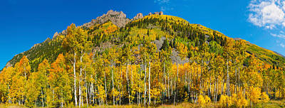 Aspen Trees On Mountain, Ophir Pass Print by Panoramic Images