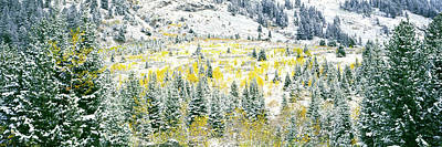 Aspen Trees On Mountain Art Print