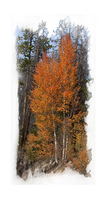 Photograph - Aspen Trio by Judy Deist