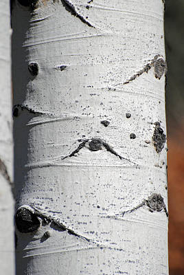 Photograph - Aspen Trunk 2 by Jeff Brunton
