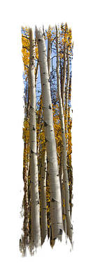 Photograph - Aspen Trunk Delight by Judy Deist