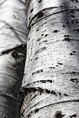 Art Print featuring the photograph Aspen Trunks In Light And Shadow by Lincoln Rogers