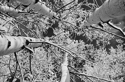Photograph - Aspen Winter In Black And White by A Hint of Color Photography