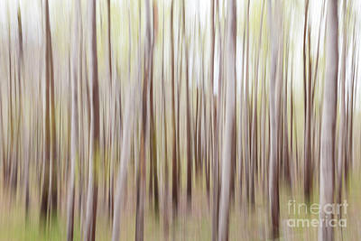 Photograph - Aspen Woods In Spring by Susan Cole Kelly