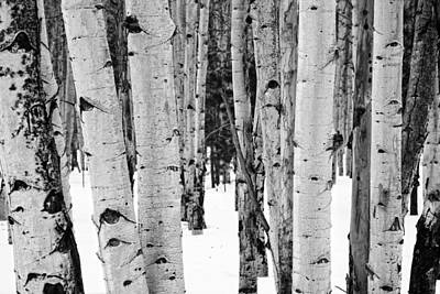 Photograph - Aspens by Alexey Stiop