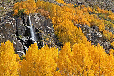 Aspens And A Waterfall Art Print by Donna Kennedy