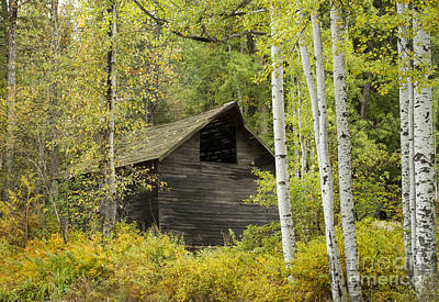 Hiding Photograph - Aspens And Barn by Idaho Scenic Images Linda Lantzy