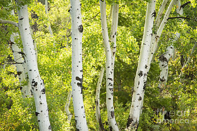 Photograph - Aspens And Green by Idaho Scenic Images Linda Lantzy