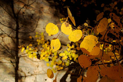Photograph - Aspens And Shadows by Daniel Woodrum
