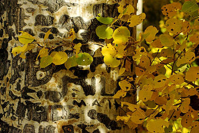 Photograph - Aspens And Shadows No.2 by Daniel Woodrum