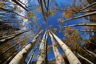 Photograph - Aspens And Sky by Daniel Woodrum