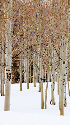 Guns Arms And Weapons - Aspens and snow by Southwindow Eugenia Rey-Guerra