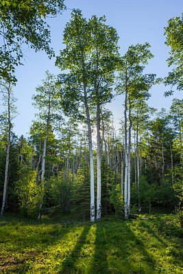 Decor Photograph - Aspens At Sunrise 1 - Santa Fe New Mexico by Brian Harig