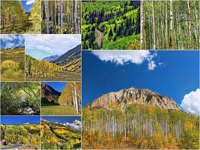 Photograph - Aspens Collage by Allen Beatty