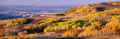 Woods.hills Photograph - Aspens Dixie National Forest Utah Usa by Panoramic Images