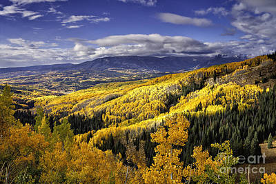 Photograph - Aspens Forever by Stuart Gordon