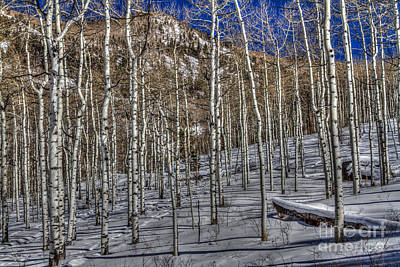 Photograph - Aspens by Franz Zarda