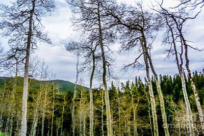 Nature  - Aspens by Gib Martinez